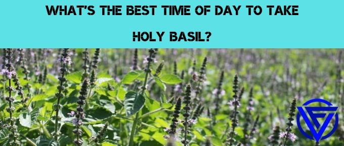 Should You Take Holy Basil At Night Or Morning? (Our Verdict)