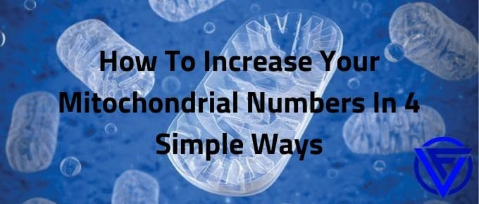 How To Increase Your Mitochondrial Numbers In 4 Simple Ways