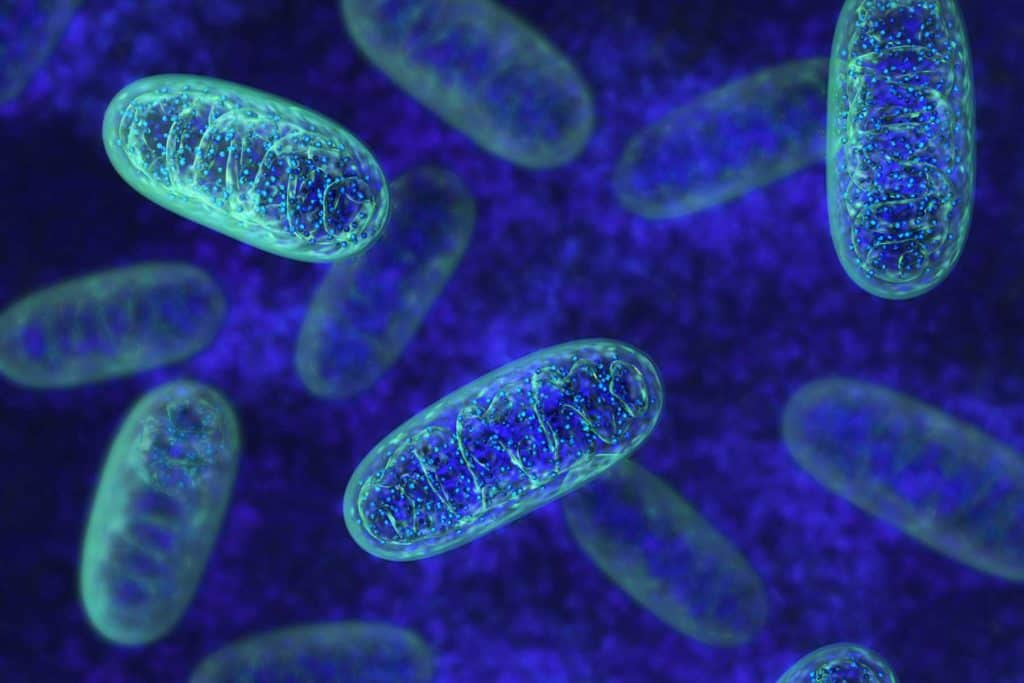 best supplements for mitochondria