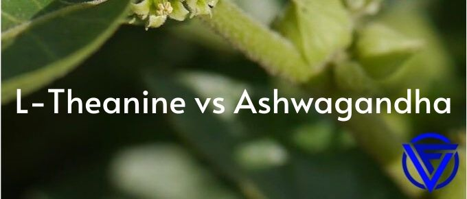 L-Theanine vs Ashwagandha – Which One Should You Take?