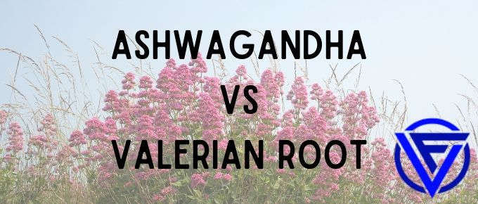 Ashwagandha vs Valerian Root – Which One Should You Take?