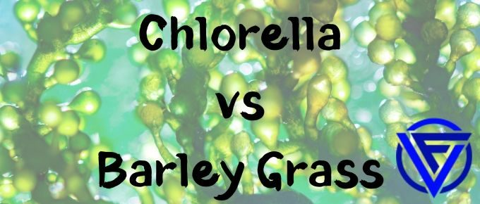 chlorella vs barley grass